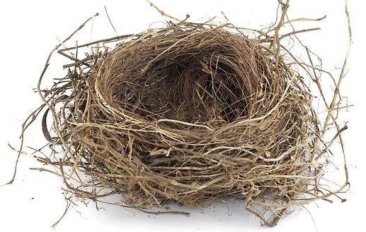 252922-empty-nest (1)